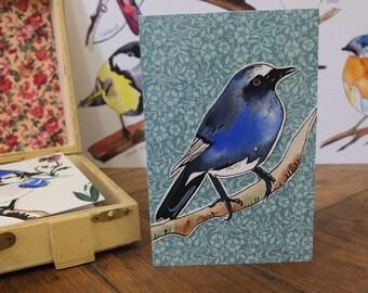 "Hand Made Card / Illustrated Greeting Card/ Bird Card / Hand Made Greetings Card ""White Bellied Blue Robin"""