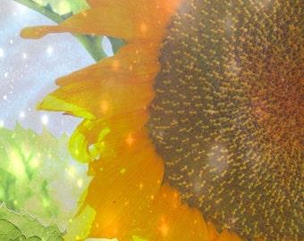 Glistening Bright Sunflower photograph summer garden floral botanical fairy light
