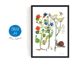 Art Print / small poster *garden herbs* (with text in German)