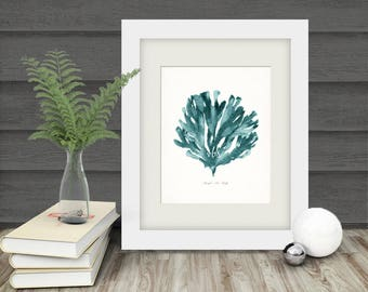 Coastal Decor Pacific Sea Kelp Natural History Giclee Art Print No. 1 - tide pool