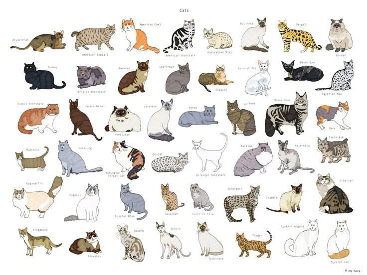 lykoi cat adoption