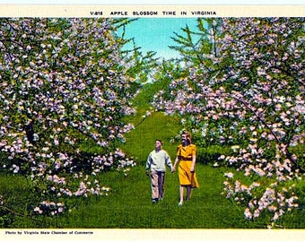 Vintage Virginia Postcard - A Stroll through the Apple Blossoms (Unused)