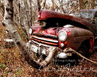 1947 Ford Sedan with a tree growing out of the bumper Photograph