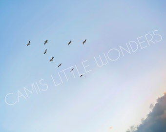 Professional Digital Photograph Wall Art - Birds Flying in Sky
