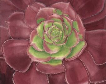 Aeonium - Home Decor - Watercolor Painting - Succulent Watercolor - Cactus Print, Succulent Art