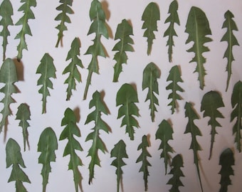 Dried Pressed Flowers Greenery / Flowers for Crafting - Natural Dandelion Leaves Foliage