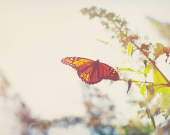 Nature Photography - Butterfly Orange Monarch Photo Nature Garden Print Insect Bug Nursery Decor Summer Spring Happy Butterfly Art Warm