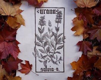Uranus-Salvia officinalis PLANHERBARIUM linocut Print