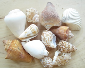 Asst Sea Shell Mix-Beach Wedding Decor-Sea Shells Bulk-Bag Of Shells-Beach Craft Supplies-Assorted Seashell Mix-Natural Seashells Assortment