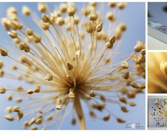 Dry flower photography