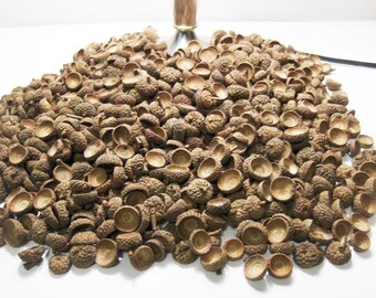 100 Natural Acorn Caps from Missouri, Wreath Rustic Decor White Oak Acorn Caps Various Sizes...  WO100