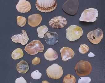 of Mediterranean set shells varied shells holes, pretty pearls, shells, pearly shells