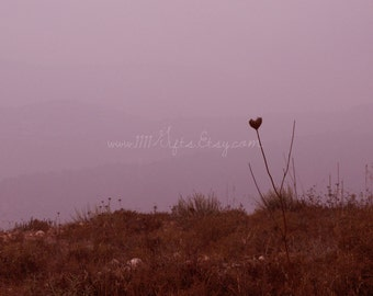 Original Photography * Lone Heart at Dawn * Nature Photograph, Heart Photography, Israel Photograph * Printable Wall Decor *Instant Download