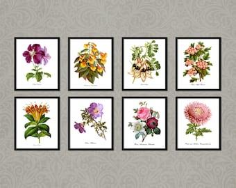 Botanical Print Set, Roses Clematis Hibiscus Basket Plant, Flower Botanical Print, Botanical Home Decor Print, Vintage Reproduction GR008