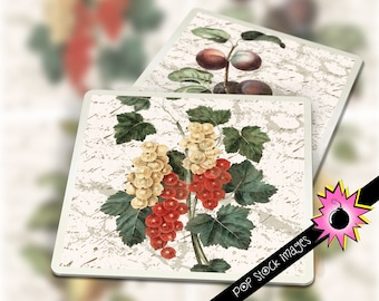 "Digital Coaster Collage Sheet - Printable VINTAGE FRUITS Coaster Kit - 3.8"" Square Digital Coasters - Printable Coaster Collage Sheet Fruit"