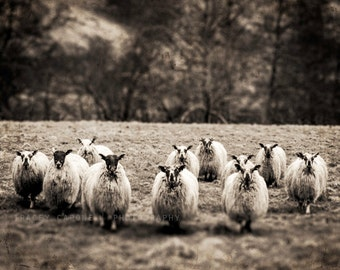 Sheep Photography, black and white, nature photograph, home decor - for nursery, animal wall art print, flock of sheep, pictures for walls