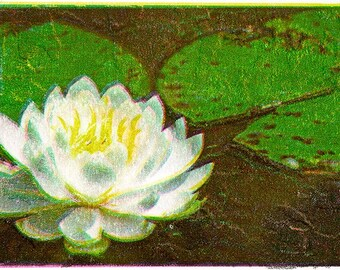 Water Lily 1 Photo Art