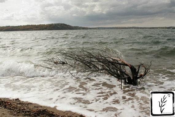"""The Drowning Tree,"" Lloyd Harbor, Long Island, New York, 2015."