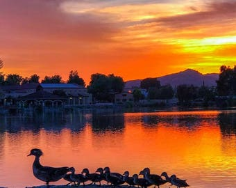 Sunset at the lake with wood ducks