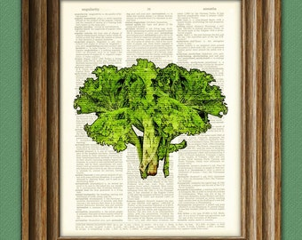 Green LETTUCE vegetable beautifully upcycled dictionary page book art print