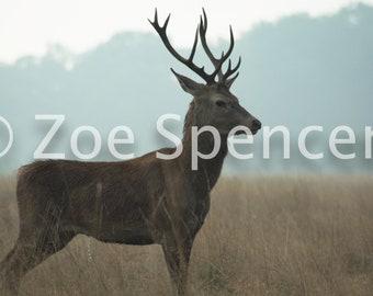 Wildlife Photography Stories