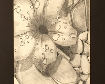 Flower Drawing - Flower on the Rocks