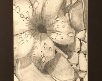 Flower Drawing - Flower on the Rocks