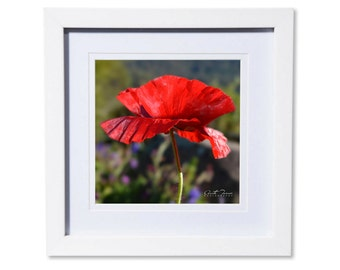 Poppy Magic Photo Print or Canvas