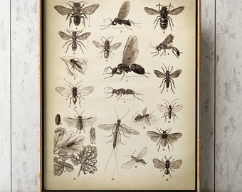 Insects print, Insect poster, Study of insects chart, fly poster, insect wall art, bee, mosquitoe, aged sepia black and white