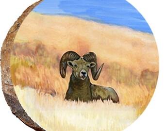 Ram Resting - DAR023
