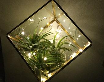 Air Plant Terrarium, Firefly Lights, Glass Terrarium, Terrarium Lights, DIY Terrarium, Birthday Gift, Terrarium Accessories