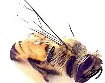 Honeybee Watercolor Painting Print