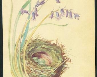 Vintage Nature Scene, Botanical,  Bookplate Illustration, Print for Framing, Sparrow Birds Nest w Eggs, Wild Hycinths, Nature in Spring