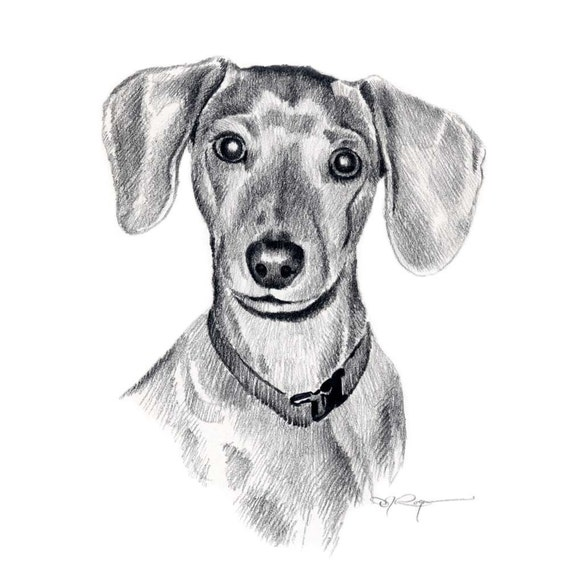 MINIATURE DACHSHUND Dog Pencil Drawing Art Print Signed by