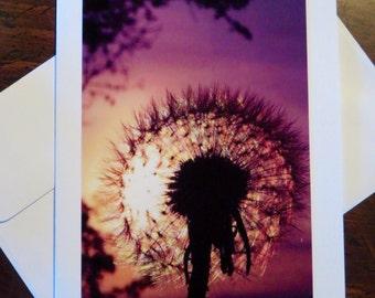 Dandelion Sunset.  Photos greeting card / note card.  Blank inside.