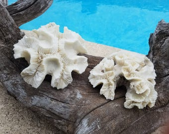 Real Authentic Vintage Open Brain Coral Coastal Antique Rock Fossil Accent Beach Cottage Living Sea Decor Mantle Coffee Table Shelf Display