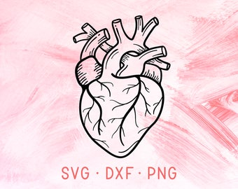 Anatomical Heart SVG, DXF, PNG, Valentine Svg Designs, Silhouette Svg, Love Svg, Heart Cut File, Cutting File For Cricut Silhouette Svg