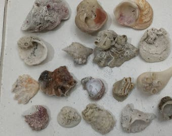 696 Unique beach finds 17 pc fused shells collage nautical sculpture beach