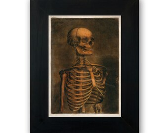 "Vintage illustration of head and torso of skeleton with nerves - fine art print, art of anatomy, home decor 8""x12"" 170"