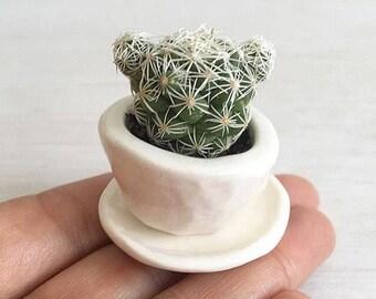 Tiny succulent planter pots, WHITE baby succulent/cactus pot flower pot with saucer