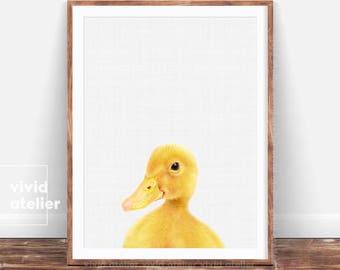 Duckling Print, Farm Animal Print, Duck Photo, Nursery Art Print, Baby Animal Wall Art, Nursery Farm Animal, Nursery Printable, Art Print