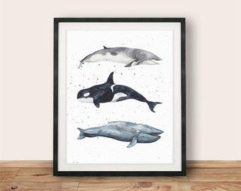 Buy One Get One, Minke Whale, Blue Whale, Orca, 8x10 or 11x14, Nautical Print, Whale Wall Art, Orca Print, Nautical Nursery, Whale Art Print