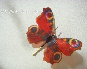 Peacock Butterfly hair pin, transparent rich colour bobby pin, handmade hair accessory single hair grip