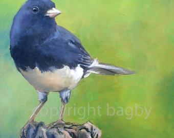 Junco Dark Eyed 'Print of Original' oil Painting colorful Green Bird Little