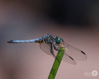 """Four (4) Nature / Dragonfly Photo Note Cards (4.25"""" x 5.5""""), blank inside with envelopes"""
