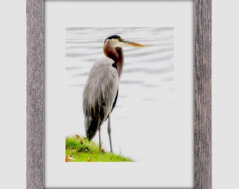 Wildlife Photography, WaterFowl, Blue Heron Print, Blue Heron Art, Blue Heron, Photography gifts, Bird Photography,WATERFOWL,