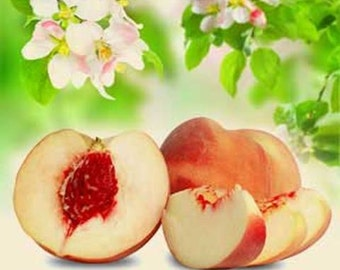 White Peaches & Silk Blossoms - 2 or 4 fl oz Floral Perfume Spray, or 10 ml Parfum Oil Roll On - Accords; Floral, Warm Woody, Musk, Fruity