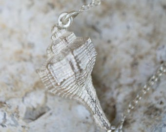 Sea shell pendant on cable chain necklace