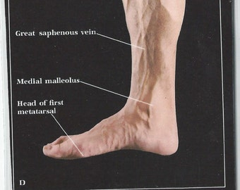Vintage Anatomical Photo Print Bookmark - Male Foot and Leg