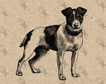 Fox Terrier Dog Image Instant Download Digital printable vintage picture clipart graphic iron on transfer burlap paper wall art HQ300dpi